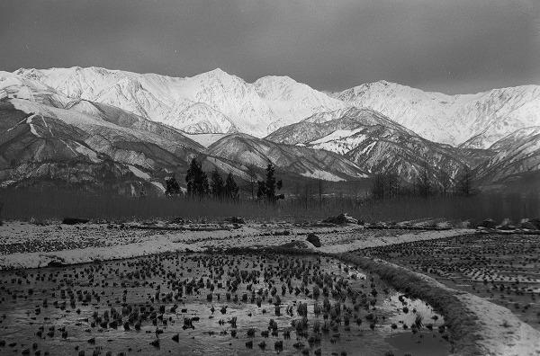 【冬の白馬連峰を望む / 白馬蕨平】1964年撮影